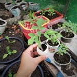 SUGBUsog Vegetable Gardening Project