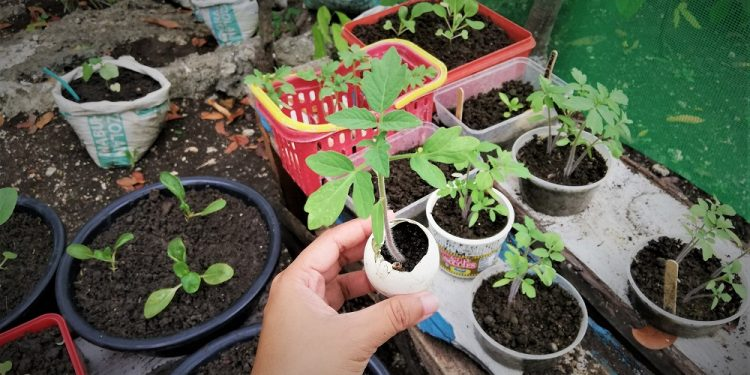 SUGBUsog Vegetable Gardening Project